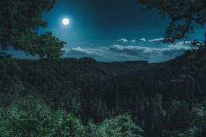 night forest beautiful moon light