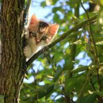 a cat who climbing tree blue sky