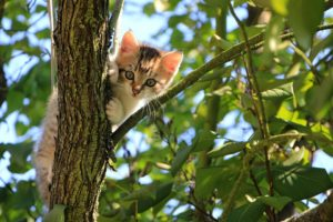 a cat who climbing tree blue sky